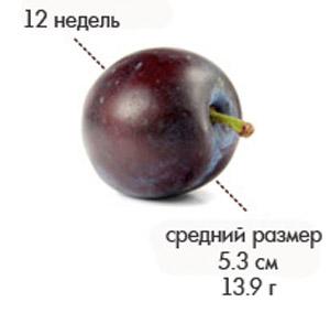 Размер плода на 12 неделе беременности