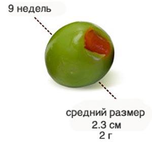 Размер плода на 9 неделе беременности