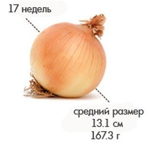 Размер плода на 17 неделе беременности