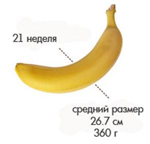 Размер плода на 21 неделе беременности