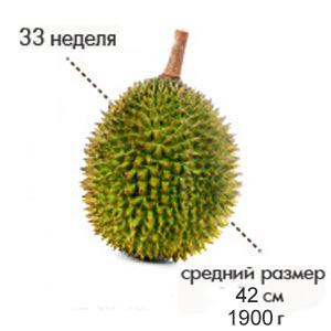 Размер плода на 33 неделе беременности