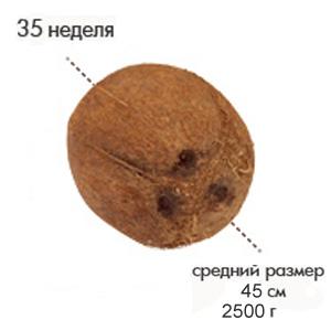 Размер плода на 35 неделе беременности