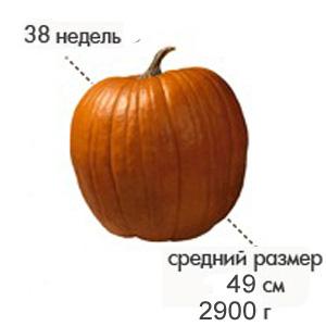 Размер плода на 38 неделе беременности