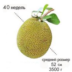 Размер плода на 40-42 неделе беременности
