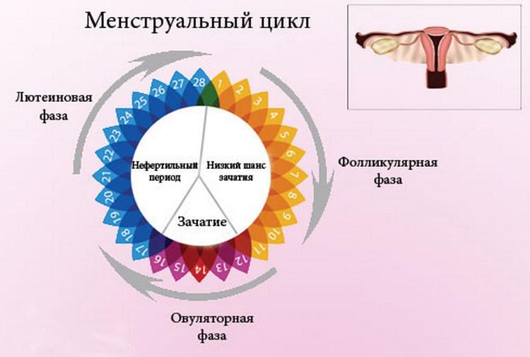 zhivut-li-spermatozoidi-posle-menstruatsii