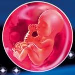 Мама и малыш на 23 неделе беременности