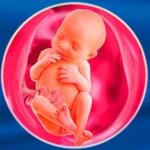 Мама и малыш на 26 неделе беременности