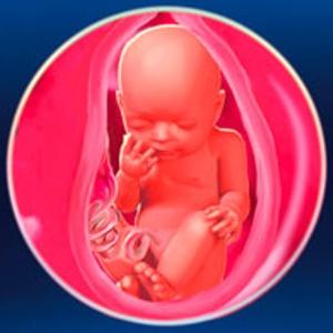 31 неделя беременности занятия сексом
