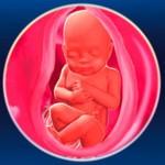 Мама и малыш на 32 неделе беременности